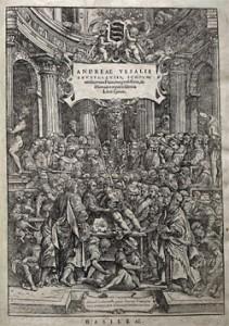 Abbildung aus dem Werk:Quelle: Vesalius: De humani corporis libri septem (Ausgabe von 1552), Google Bücher